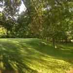 Golf green among trees